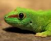 maedu32 - éleveur de reptile Reptilzer