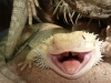 alexandraa44 - éleveur de reptile Reptilzer
