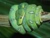 emmy-leelove - éleveur de reptile Reptilzer