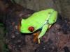 KAMO22 - éleveur de reptile Reptilzer