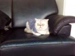 Kitty - Cygne (3 ans)