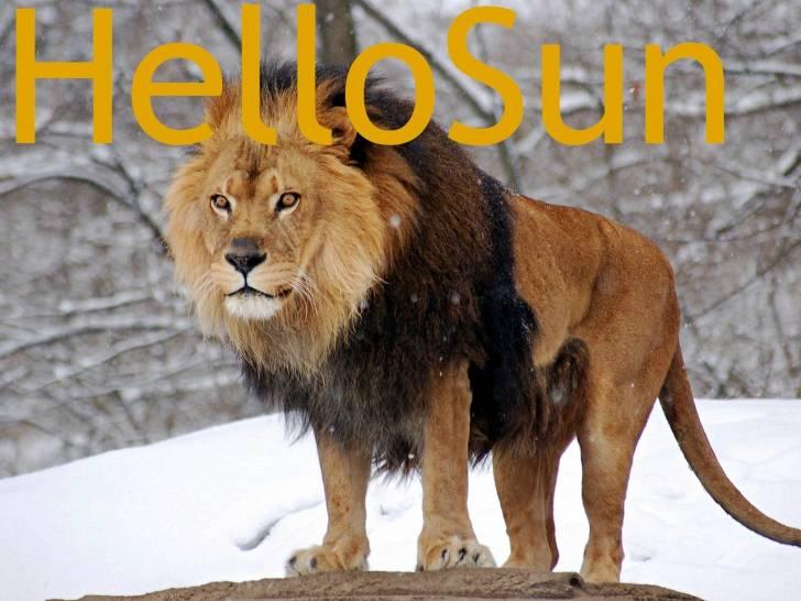 Lion - Lion Mâle (7 ans)