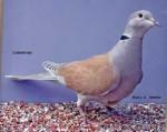 Loulou - Oiseau (2 ans)