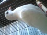 Jaco - Mâle (2 ans)