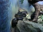 Serpent serpent -   (Vient de naître)